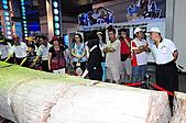 花蓮米棧村豐年祭之旅:樹-化石