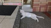 北部濱海風光:IMAG6799.jpg