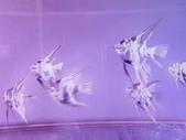 神仙魚:IMG_20141215_151636.jpg