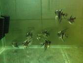 神仙魚:IMG_20141215_154329.jpg