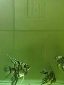 神仙魚:IMG_20141215_152945.jpg