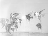 神仙魚:IMG_20141215_145758.jpg