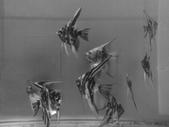 神仙魚:IMG_20141215_144057.jpg