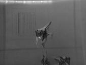 神仙魚:IMG_20141215_143539.jpg