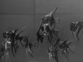 神仙魚:IMG_20141215_143604.jpg