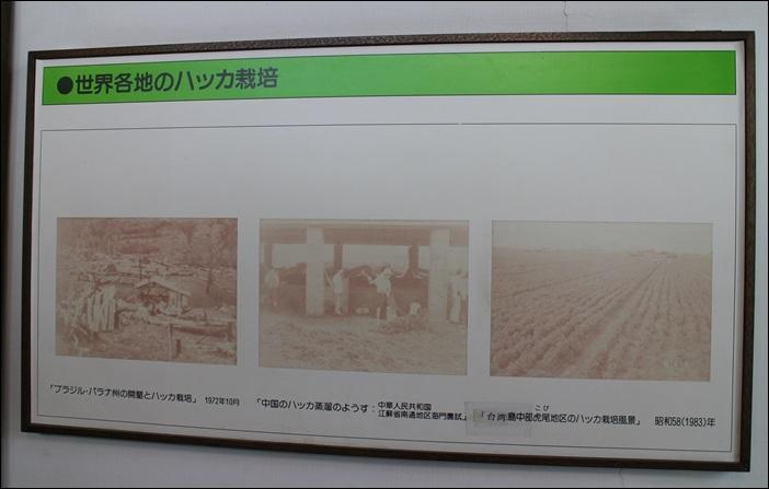 北海道7/5:IMG_5994.JPG