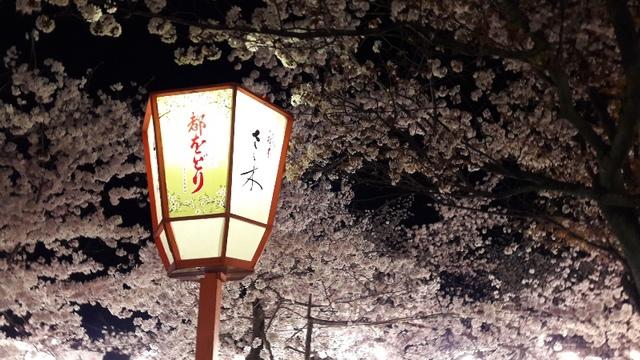 關西賞櫻46.jpg - Japan