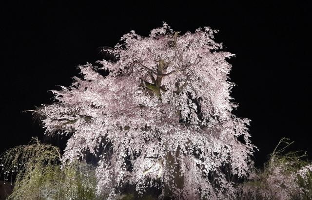 關西賞櫻45.jpg - Japan