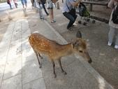 日本27天遊(在奈良的日子):登大路園地-第2張.JPG