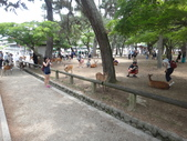 日本27天遊(在奈良的日子):登大路園地-第1張.JPG