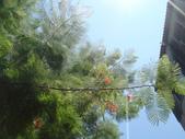 2008.08.17 台南一日遊:1638555838.jpg