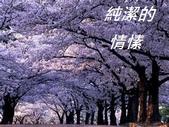 花:thumbnailCA2UXAJN - 複製.jpg