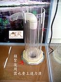 DIY半水景澤龜飼養缸:2呎半水景缸5.jpg
