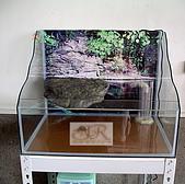 DIY半水景澤龜飼養缸:2呎半水景缸6.jpg
