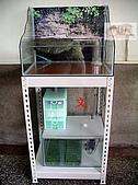 DIY半水景澤龜飼養缸:2呎半水景缸7.jpg