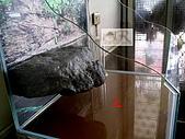 DIY半水景澤龜飼養缸:2呎半水景缸10.jpg