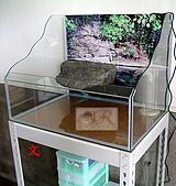DIY半水景澤龜飼養缸:2呎半水景缸11.jpg