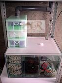 DIY半水景澤龜飼養缸:2呎半水景缸13.jpg