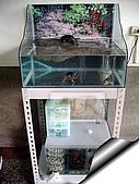 DIY半水景澤龜飼養缸:2呎半水景缸14.jpg