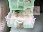 DIY半水景澤龜飼養缸:2呎半水景缸15.jpg