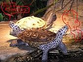 爬蟲:鑽文1.jpg
