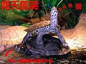 爬蟲:鑽文.jpg