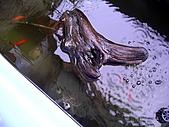 爬蟲:小班龜,拍的不清楚^^.jpg