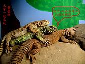 爬蟲:華麗與摩洛哥.JPG