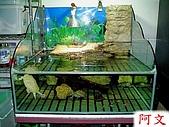 DIY半水景澤龜飼養缸:上圖是第一代設計的造型缸,過濾槽在上部左邊.jpg