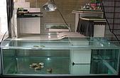 DIY半水景澤龜飼養缸:上圖.第二代使用底部過濾槽的方式.(缸子主人是chiuhui,主