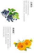 山桑子+金盞花:3.jpg