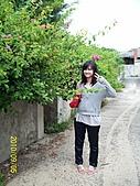 Xuite活動投稿相簿:私房花現-澎湖廢棄眷村的馬櫻丹