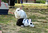 2007三立新聞採訪 - 海綾月第二次兔聚:IMG_3956.jpg