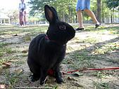 2007三立新聞採訪 - 海綾月第二次兔聚:IMG_3936.jpg