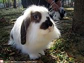2007三立新聞採訪 - 海綾月第二次兔聚:IMG_3938.jpg