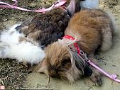 2007三立新聞採訪 - 海綾月第二次兔聚:IMG_3952.jpg