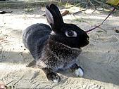 2007三立新聞採訪 - 海綾月第二次兔聚:IMG_3940.jpg