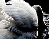獨角獸 飛馬 圖片收集:2073291955_eaea229c29.jpg