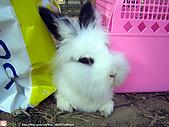 2007三立新聞採訪 - 海綾月第二次兔聚:IMG_3941.jpg