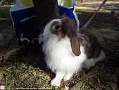 2007三立新聞採訪 - 海綾月第二次兔聚:IMG_3942.jpg