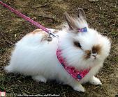 2007三立新聞採訪 - 海綾月第二次兔聚:IMG_3950.jpg