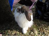 2007三立新聞採訪 - 海綾月第二次兔聚:IMG_3943.jpg