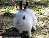 2007三立新聞採訪 - 海綾月第二次兔聚:KIKI