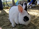 2007三立新聞採訪 - 海綾月第二次兔聚:IMG_3934.jpg