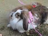2007三立新聞採訪 - 海綾月第二次兔聚:IMG_3951.jpg