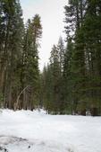 Yosemite National Park:IMG_2481.jpg