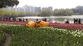 中國上海自由行 2016/3/3~3/15:IMAG5262.jpg