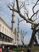 土耳其之旅 2013/3/20~3/30:IMG_2193藍色清真寺.JPG
