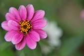 2011 0424 花:IMG_1621.jpg