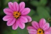 2011 0424 花:IMG_1627.jpg